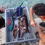 Le pêcheur Moeava, merci pour les poissons !