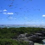 L'îlot aux oiseaux