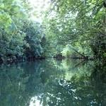 Rivière Faaroa à la rame