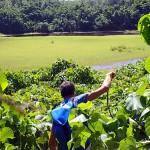 Mur végétal du lac Lanumaha