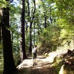 Fraicheur de la forêt sur le versant Sud de la ligne de crête