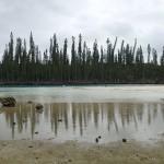 Baie d'Oro, piscine naturelle à BM et pins colonnaires