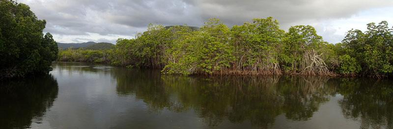 Mangrove et palétuviers de la rivière La Foa