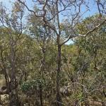 A la recherche du koala