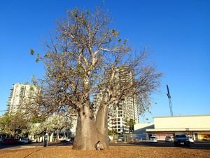 Centre ville de Darwin !
