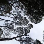 Canopée sur le chemin des petites Hogarth Falls