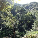 Les Montezuma Falls (104m)