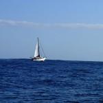 Un voilier inconnu faisant route au moteur en sens inverse…