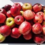 Assortiment de pommes glanées sur la route