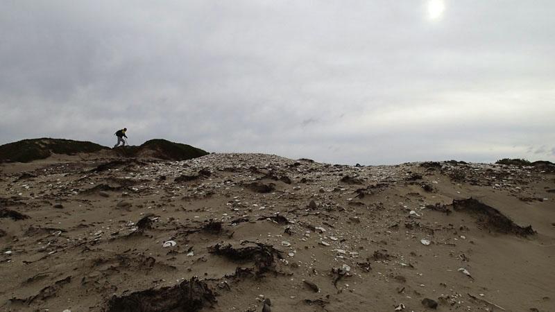 Midden aborigène à Point Lesueur (Maria Island)