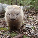 Aussi mignon qu'une marmotte