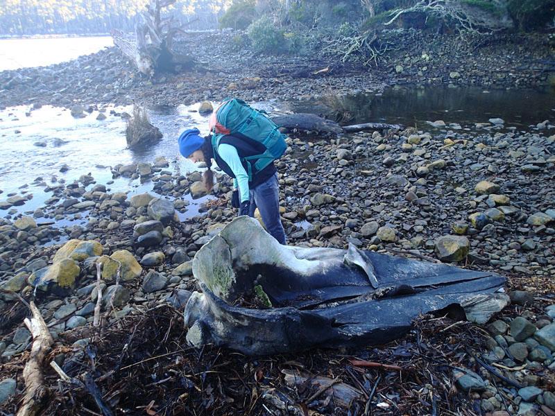 L'os de baleine de Simmonds Creek (Port Arthur)